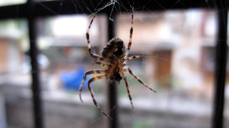 Monster in my window !