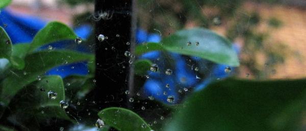 Here comes the rain (5) !