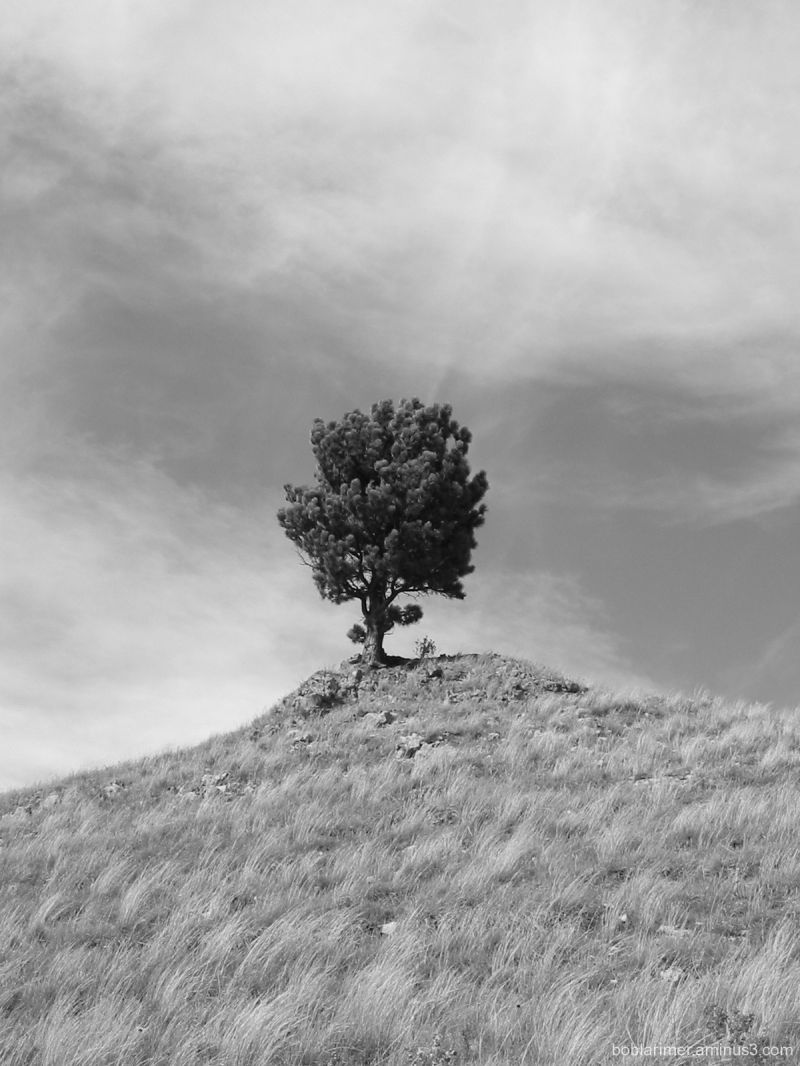 Lonely Tree, Part Trois