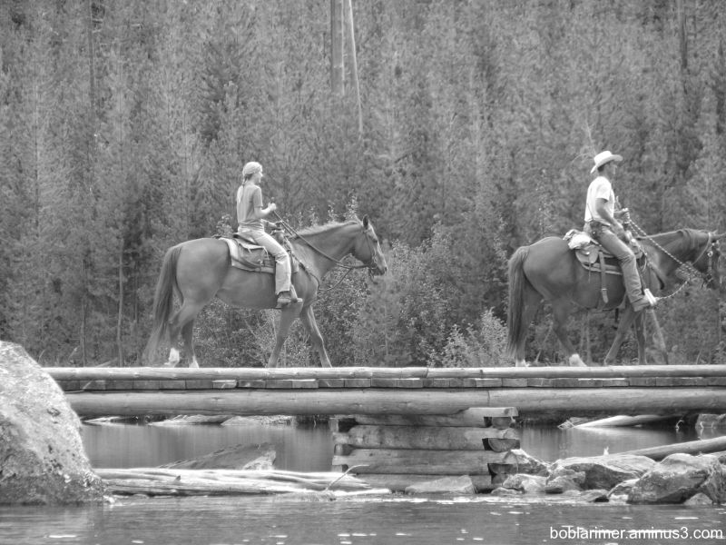 Horses on a Bridge II