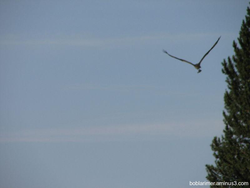 Osprey Fish Lake