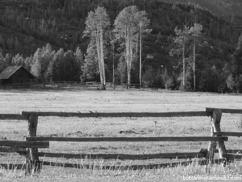 Barn, fence and coyote