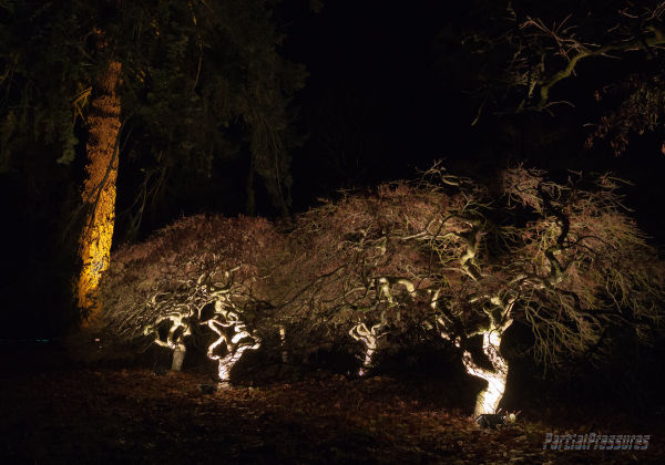 illuminations in the forest