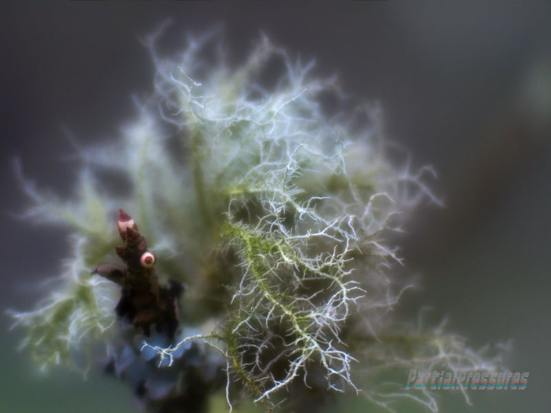 Lichen reaching out