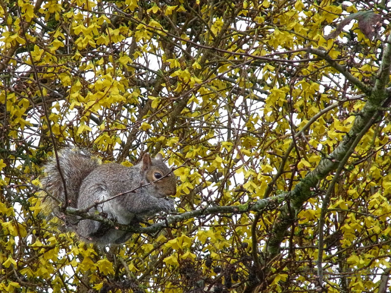 A squirrel has breakfast surrounded by yellowness