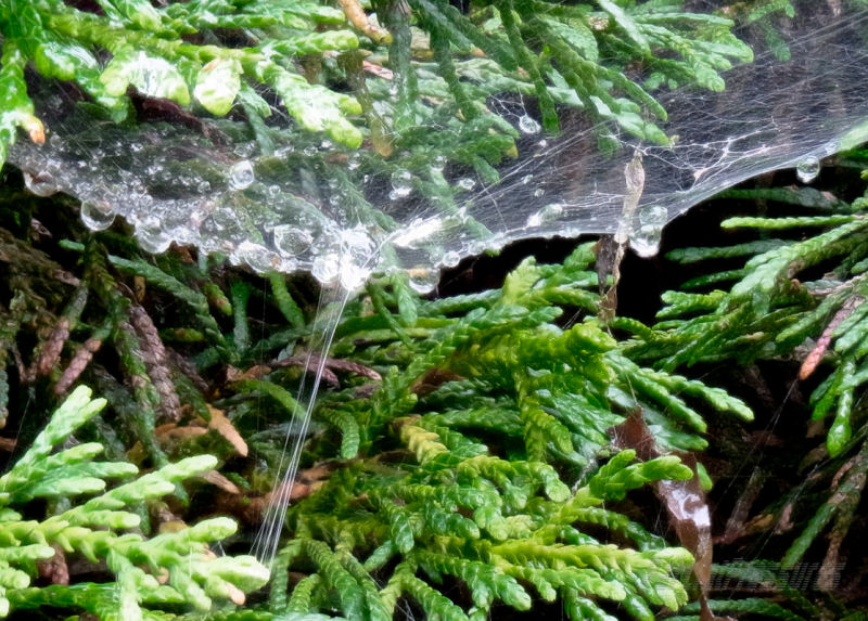 Raindrops caught in a web