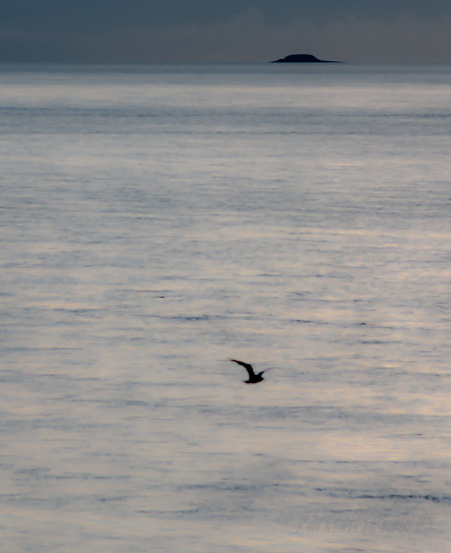 Gull, island, and the gulf between them