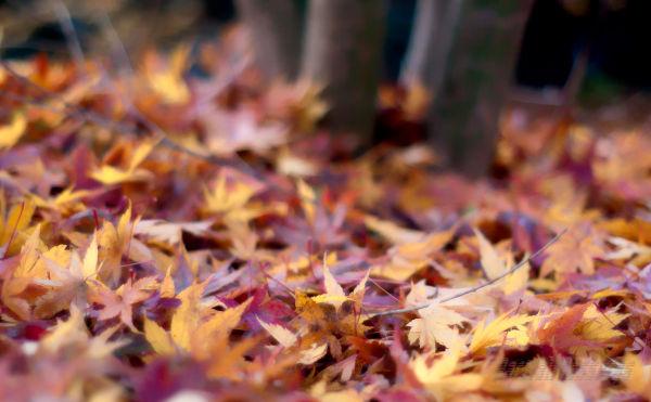 Those Fallen Leaves Lie Undisturbed Now