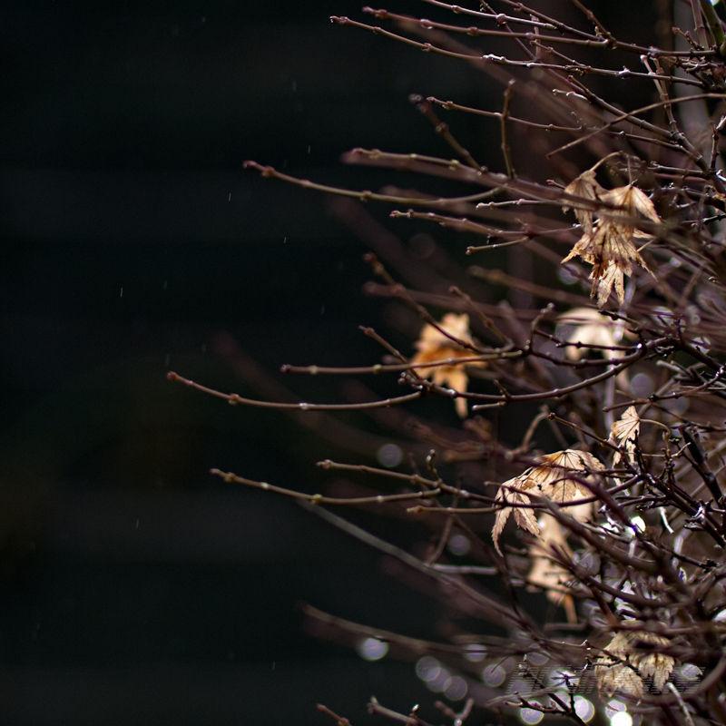 A light mist falls beside maple twigs