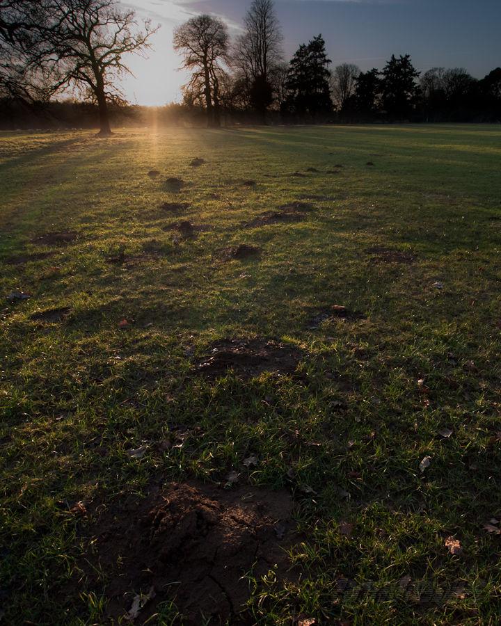 Molehills arrayed in the setting sun