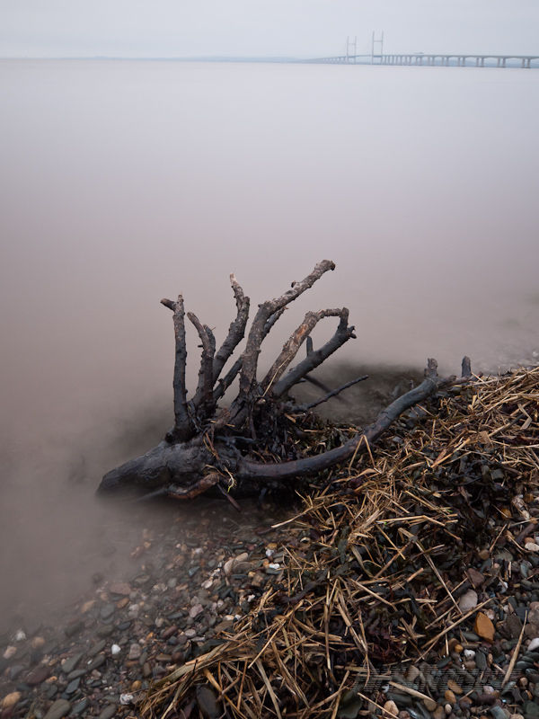 Driftwood on the tide