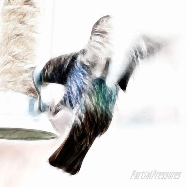 Fractal starling 1