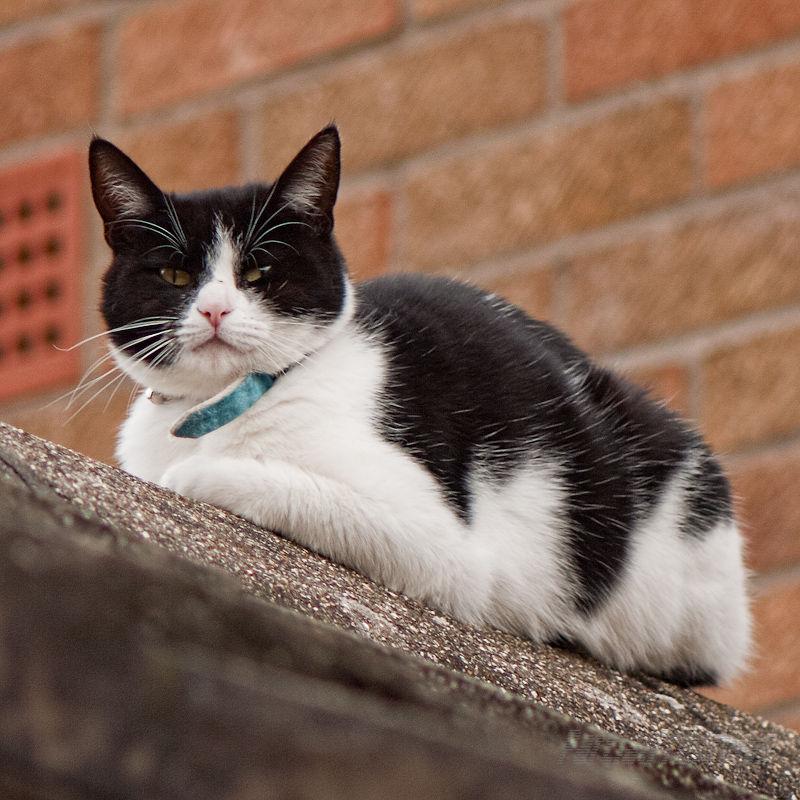 Next door's cat eyeing the birds in my garden