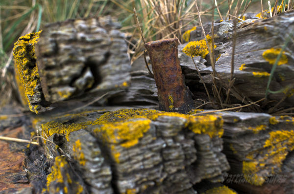 Once, this timber held the deck of a ship
