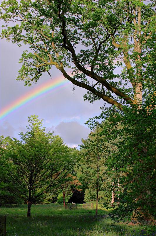 Rainbow arcing through the trees