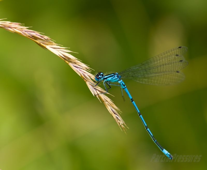Damselfly on grass