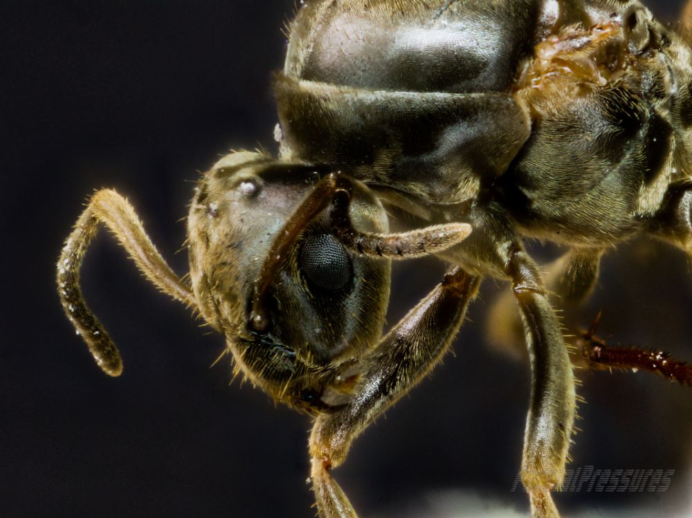 Head of a surplus-to-requirements ant queen