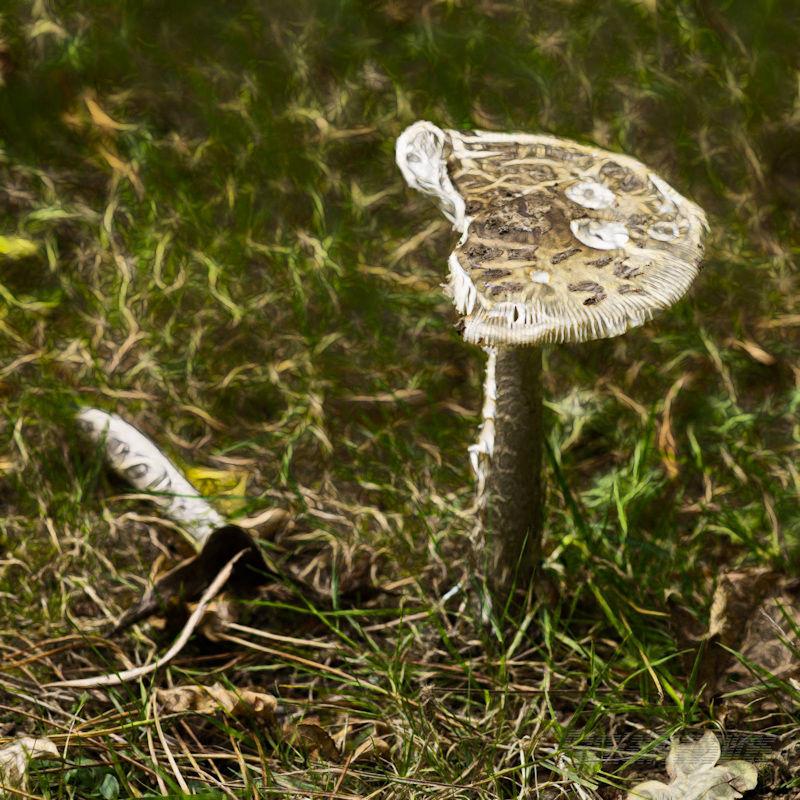 Half a mushroom