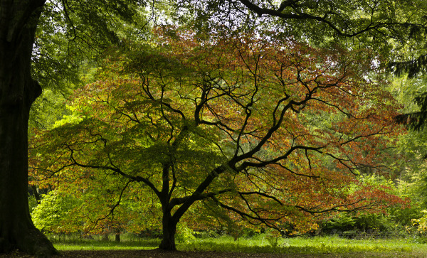 The most photographed tree in Gloucestershire