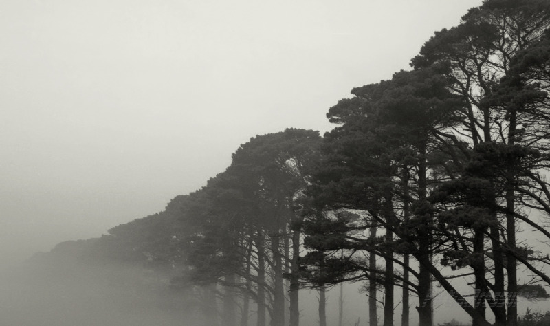 A row of trees fades into early morning fog