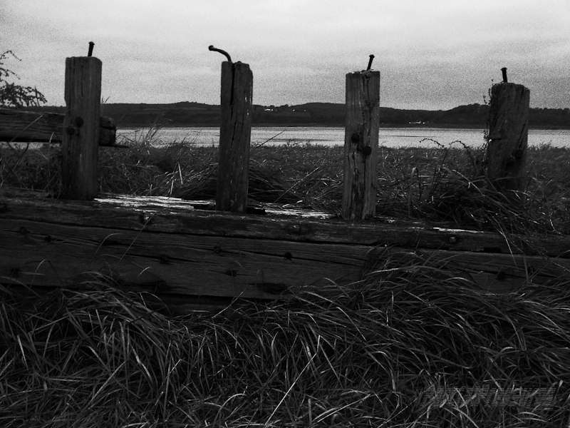 A wreck's ribs rise from marsh grass