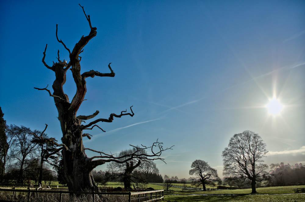 Oak skeleton at noon on the winter solstice