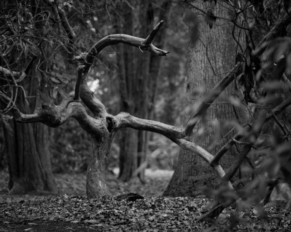 Strange figures in the dusky forest...