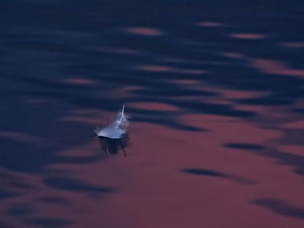 Yin Yang feather