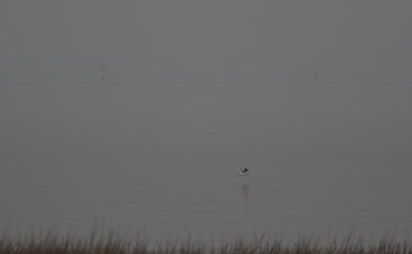 A gull flies low over the slackening tide
