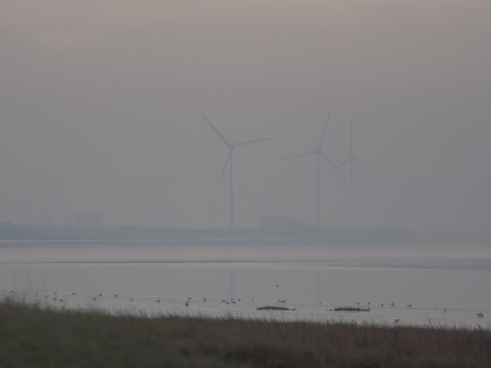 Wind turbines on a calm winter morning