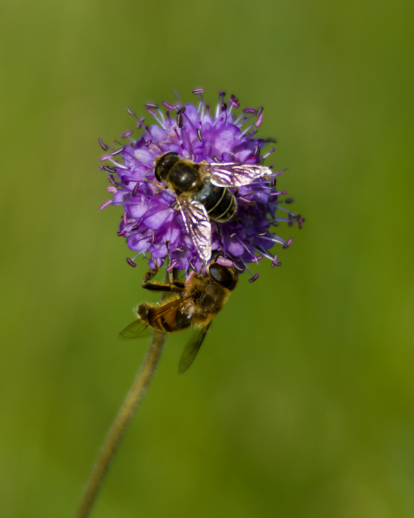 Busy and buzzy