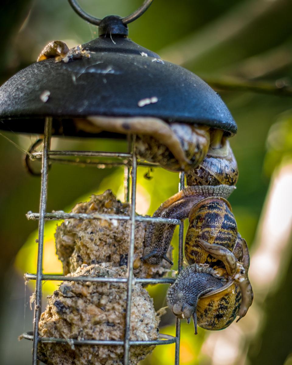 Snail feeder?