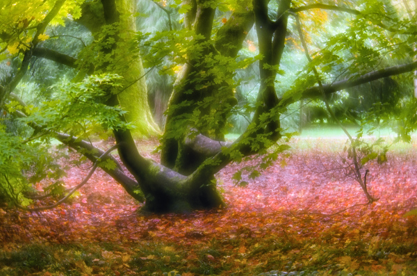 The Hissing of Autumn Woods