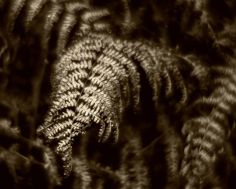 Golden fronds