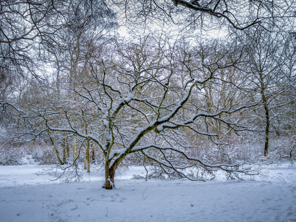 The Most Photographed Tree in Gloucestershire - Wi