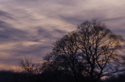 Dappled Sky