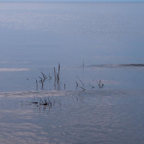 Tidal Wavelets