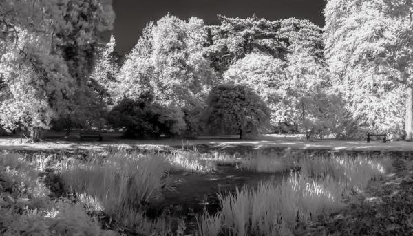 The Black Pond
