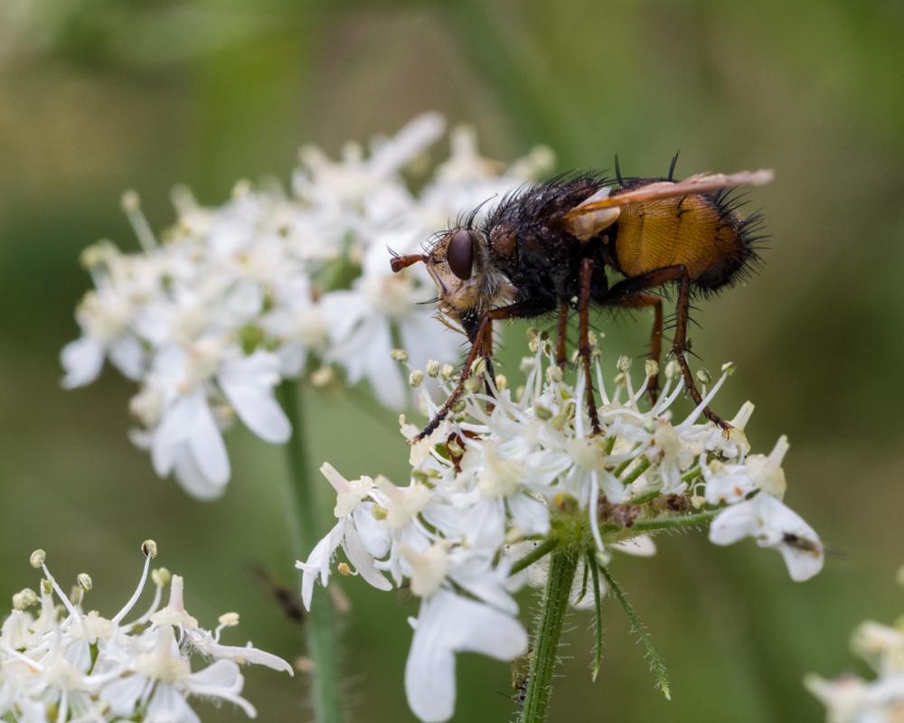 Bad News for Moths
