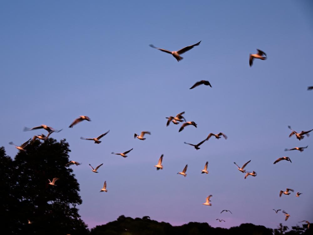 We Fly At Dawn