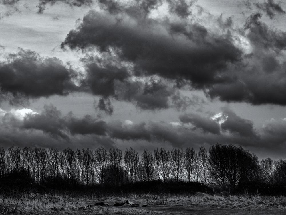 Windbreak