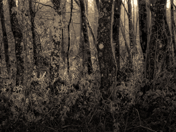 Musings: Golden Forest
