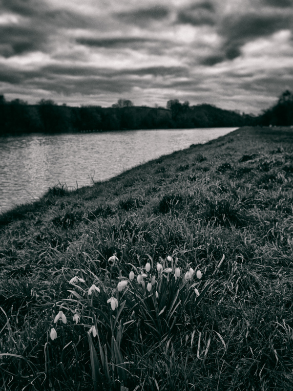Spring Reaches the Canal