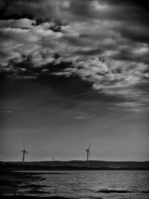Creatures of Wind