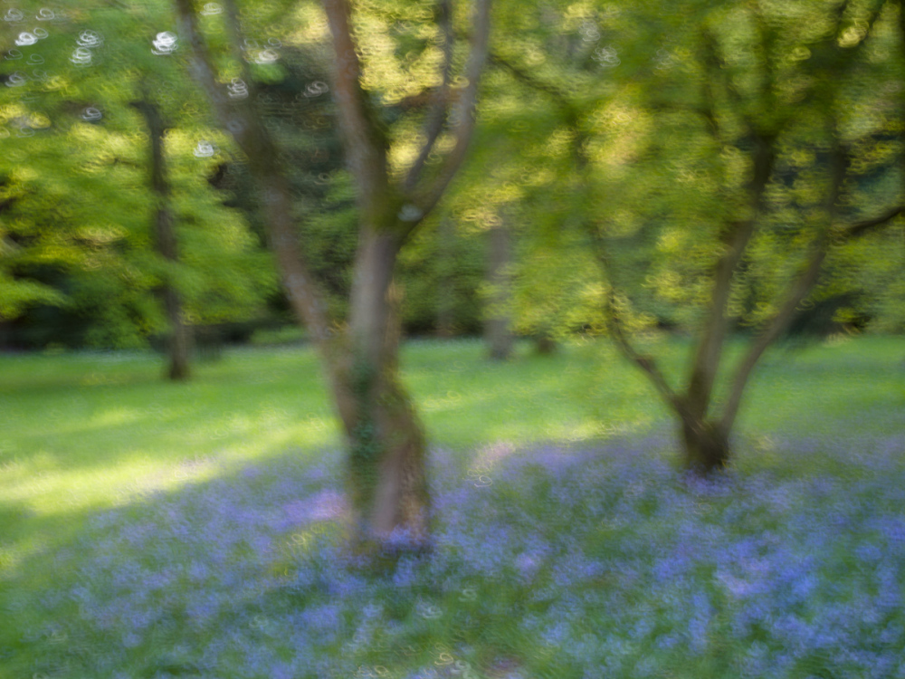 Squigglism and Bluebells