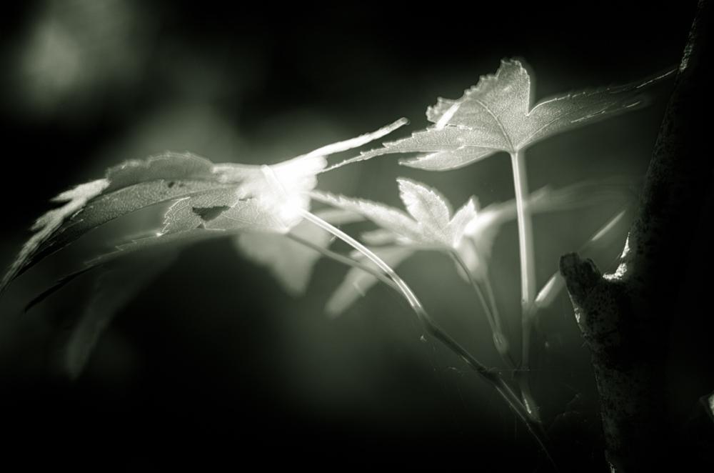 Summer Black (and white) Magic