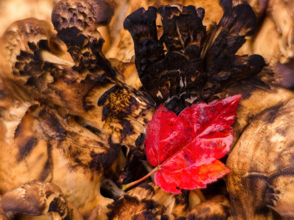 Fungus and Leaf