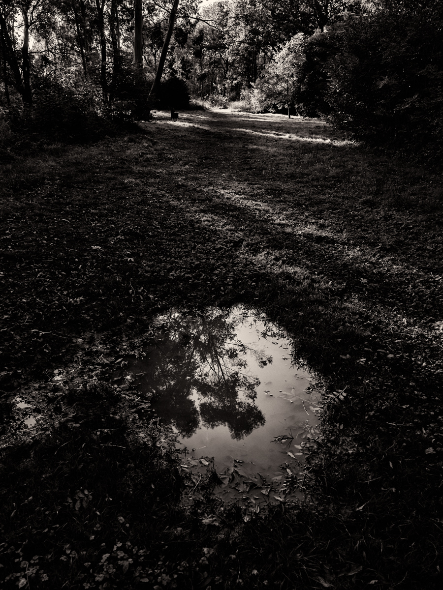 Puddle and Gums