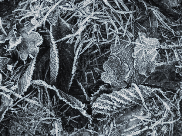 More Frost and More Leaves : )