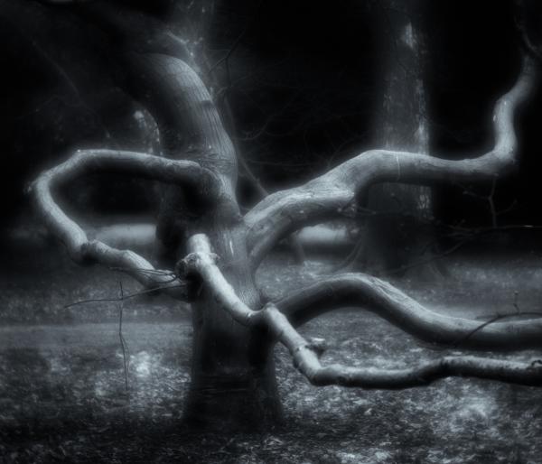 Tree Yoga - The Octopus